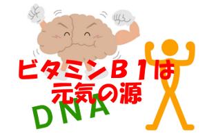 ビタミンB1はエネルギー代謝等の効能がある|髪との関係は?