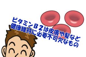 ビタミンB2と育毛の関係|髪の健康維持や赤血球を作る作用がある
