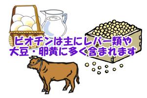 ビオチンが含まれる食品一覧と摂取量|レバーや大豆・卵黄に多い