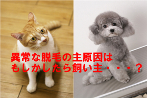 犬や猫の脱毛原因は皮膚疾患やストレスなどなので人間と似ている