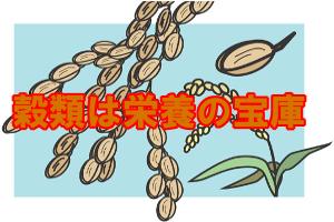 育毛的にも注目の穀類|髪に重要な栄養素が豊富に含まれている