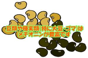 メチオニンを多く含む種実類・豆類|大豆食品全般の含有量が高い