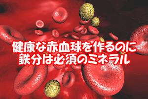 鉄と髪の深い関係|細胞分裂は赤血球が運ぶ酸素が必要不可欠