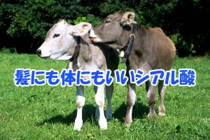 動物の唾液に含まれるシアル酸|IGF-1を増やすので育毛にも良い