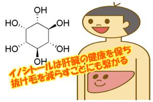 肝臓の脂肪付着を防ぐイノシトール|不足すると抜け毛が増える