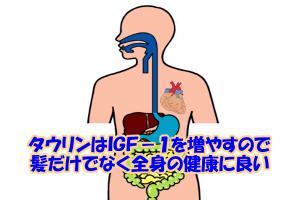 タウリンはIGF-1を増やすと考えられているので適度であれば全身の健康にも良いといえます