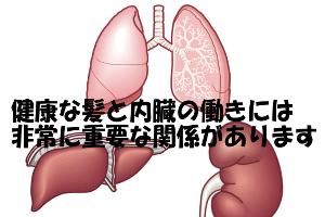 髪の毛の異常にとても関係が深い臓器は肺臓・肝臓・腎臓である