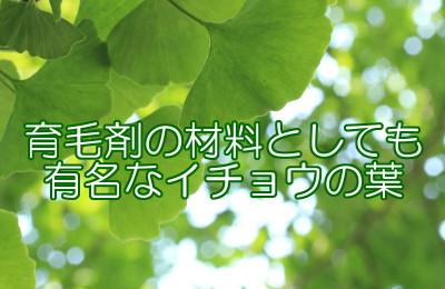 イチョウ葉を使った育毛剤の作り方|2種類の漢方の追加がオススメ