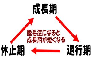 ヘアサイクルは3つの時期を繰り返す|異常を起こすと周期が狂う