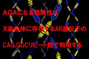 AGA発症リスクの度合いはCAG・GGCリピートでわかる
