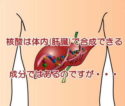 核酸を食品から摂取する必要性について|デノボ合成は質が悪い?