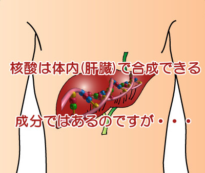 核酸は体内でも合成されますが食品から摂取するのも必須といわれる