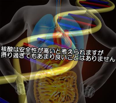 核酸は副作用がない優れた成分|過剰摂取分は排泄される