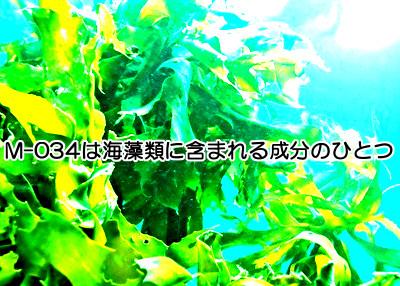 注目の褐藻エキス成分M-034とは何か|育毛促進させる4つの効能