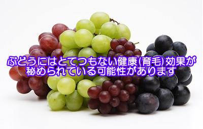 ブドウ種子エキスが発毛を促す|優れた抗酸化力をもつopcを含む