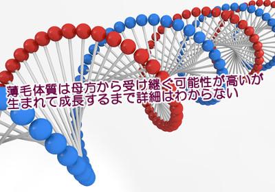薄毛の遺伝情報は一般的にX染色体(母方)から受け継ぐといわれるがそれが仕組みのすべてとは限らない