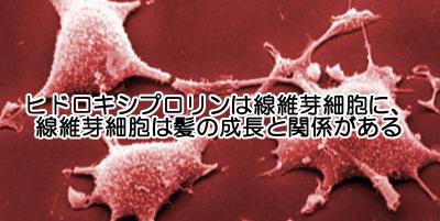 コラーゲンにはヒドロキシプロリンという成分が含まれておりそれの血中濃度があがると抜け毛が減るという研究結果も存在する