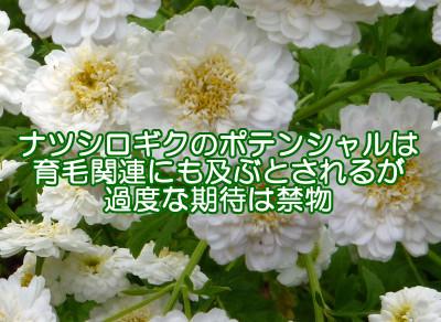 夏白菊は育毛にも関連する作用があると注目されていますがそれに頼り過ぎないことも重要