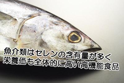 セレン含有量が多い代表的な食品である「魚介類」の一覧表