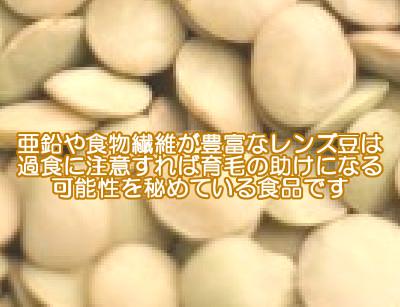 レンズ豆は古くから栄養価が高いと評価された食べ物のひとつであり食べ過ぎに気をつければ育毛の助けとなる可能性を秘めていると考えられる