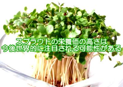 スプラウトと育毛の関係|特にブロッコリーの新芽が注目される