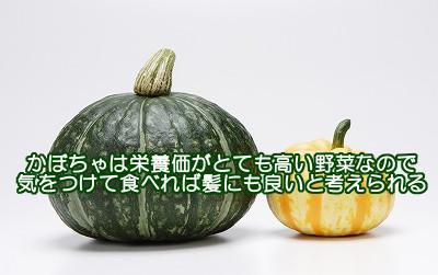 南瓜は栄養価がとても高い緑黄色野菜なので食べる量に注意すれば育毛的にも役立つ食べ物だと考えられます