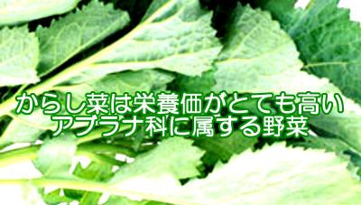 からし菜は育毛のためにも良い食べ物|葉酸の含有量が高いのが特長