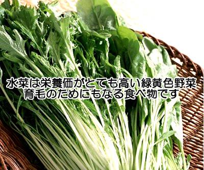 水菜は栄養価が高く食べやすい緑黄色野菜なので育毛体質を作り上げる上でも重要な食べ物のひとつといっても全く過言ではない