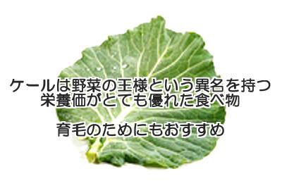 ケールは野菜の王様に相応しい栄養価の高さを誇る食べ物なので育毛のためにも重要な栄養補給源となる