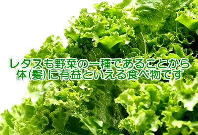 レタスの栄養価は高くないが健康(育毛)の為に食べる価値あり