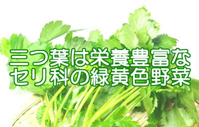 三つ葉は隠れた栄養豊富な緑黄色野菜で旬である春には育毛のためにも積極的に取り入れてみましょう