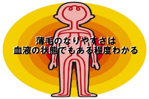 薄毛になりやすい人は貧血・血行不良・炎症体質の3つである