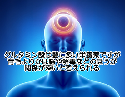 グルタミン酸は育毛より解毒や脳の活性化、皮膚の健康の方が関係が深いと思われる