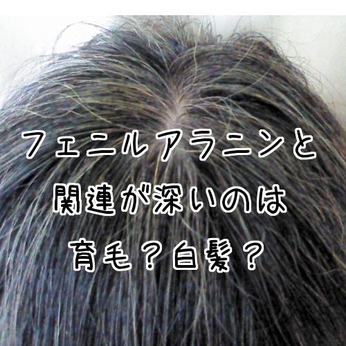 フェニルアラニンは育毛というより白髪対策に向いてる?